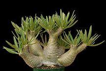 Plantas extrañas