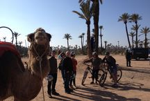 AXS Off Road Day Tours in Marrakech.