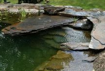 Natural Swimming Pools and Ponds / by Nikki Wills