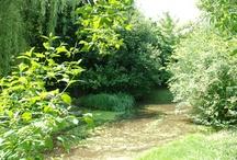 Gartenparadies 07 | 2010 / Der Sommer zeigt sich uns in diesem Monat von seiner grünsten Seite. Ein echtes kleines Paradies direkt vor der Agentur-Haustür!