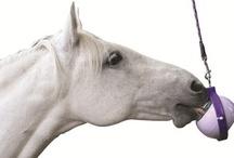 Häst Utrustning