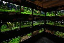 Aquarium Racks