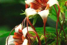 Lilies / by Amanda Kupiec