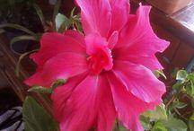 Natura,flori
