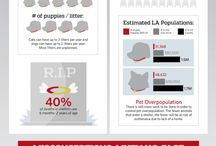 spay / neuter/ pet population