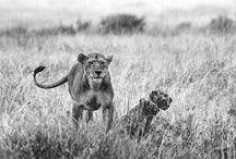 Animales / Fotografías de animales realizadas en distintas partes del mundo por Javier Aranburu