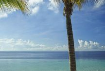 Karibien / Reiser til Curacao, Aruba og St.Martin
