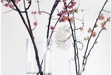 sakura / by Mel Basañez