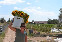 Farm Grown Flowers