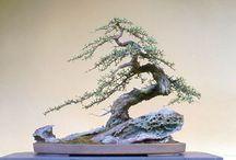 bonsaje a miniaturní krajiny