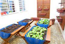 Jardinaria: Horta caseira / Cultivar uma horta caseira significa estra mais próxima da natureza, observar os ciclos de desenvolvimento, degustar do sabor dos alimentos e acreditar que todos podem.