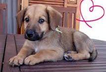 perritos / Esta tabla es tener único perro que es uno de mi amor más grande y por lo general le encantan los animales