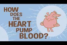 Body Systems: Circulatory