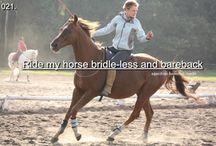 Horses / My dream of horses