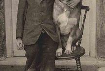 Dogs  //  Vintage