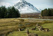 Scotland / by Alli Lane