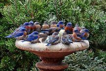 BIRDS & BIRD HOUSES / #bird #birds #birdhouses