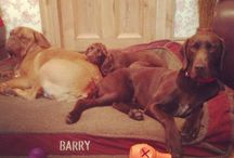 Let sleeping dogs lie / Dogs we love that stay with us while their owners are on holiday