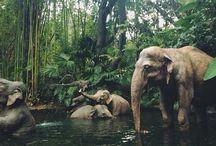 Słonieee ❤