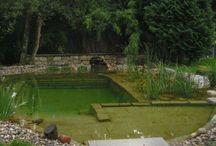 Biyolojik havuz
