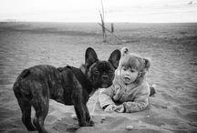 Bulldog Francés Atigrado