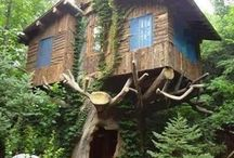 Tree houses / One day