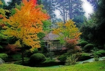 Japanese Garden / by Carolyn Swann