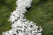 ogrody / piękne ogrody