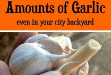 Gardeninh
