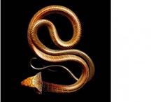slangen-snake
