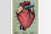 Anatomy Art