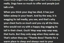 Dog loss
