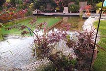 eva's garden / Gartenimpressionen