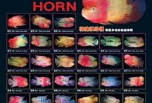 Flowerhorn Cichlid enthusiast!  Just $10.99, very high quality!   (http://www.petzonesd.com/flowerhorn-poster