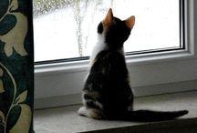 kočičky - cat