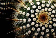Cactus & succulents / by Kristel Ruiz