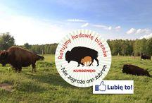 Ratujmy hodowlę bizonów