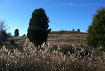 Our land / Land for sale in Southeastern Ohio by Acreage Investments