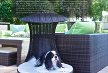Pet Friendly Home Decor / For those who love their pets, and their home