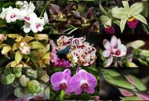 Flowers: Orchids / Flowers last for 2 or 3 months, plants can be kept indoors with almost no care, or outdoors on porch or patio...what's not to love.  If you want to ask us someone a question about them, try our experts: http://www.gardeningknowhow.com/