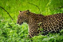 Sri Lanka Travel Guide / by Laurel Robbins: Monkeys and Mountains Adventure Travel Blog
