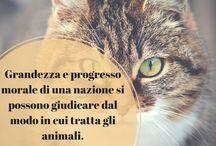 Aforismi sugli animali / Le frasi più belle sugli animali