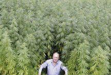 weed pic / weed