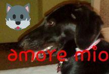 Aladel ♥ my dog
