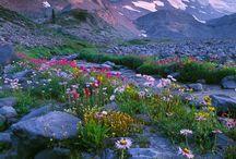 Живописные пейзажи