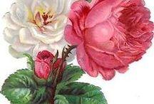 flores que amo