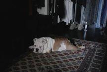 Charlotte's bulldog / My lovely dog