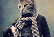 Cats with clothes