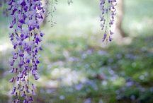 tájképek, virágok, kertek