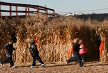 Find 2015 Farm Mazes from Chicago Metro and Beyond / Visiting a corn maze is one of the fall traditions. See the mazes the farms offer this year. We have collected many of the destinations with driving distance from Chicago in the Chicagoland Vibary Network digest, http://chi.vibary.net/WebDigest/digmain.asp?d=FARMmaze